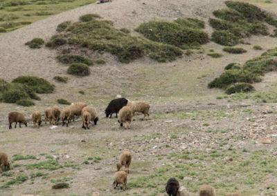 andrea-muenger-ladakh-12