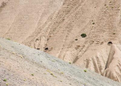 andrea-muenger-ladakh-38