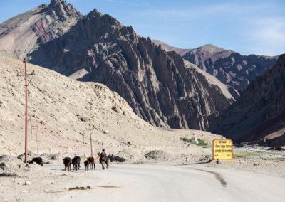 andrea-muenger-ladakh-41